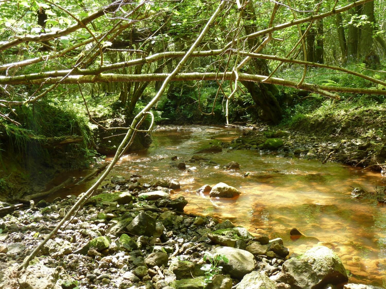 The Shortbridge Stream