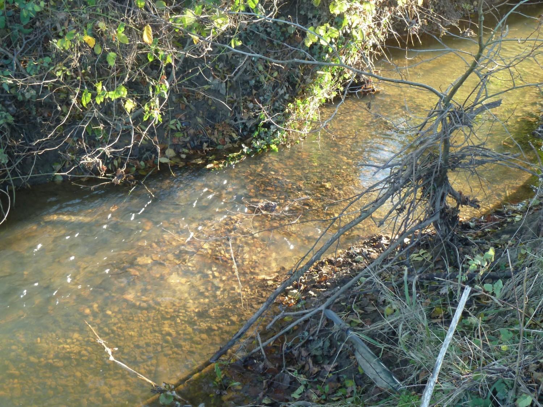 Sea Trout Redd on the North End Stream
