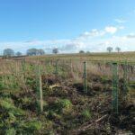 Trees planted at twineham