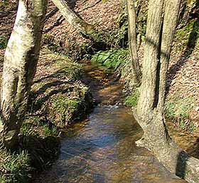 The headwaters of the Sussex Ouse on the Ashown Forest