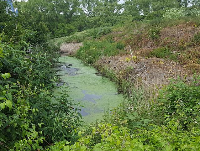 Broadwater Brook HLF